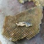 Revamping Jewellery